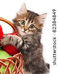 Cute little Siberian kitten with red clew isolated on white background - stock photo
