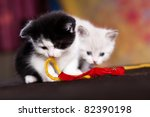 Stock photo portrait of a young small persian kitty 82390198