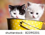 Stock photo portrait of a young small persian kitty 82390201