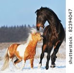 pony and horse are plaing in the winter
