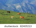 horse in grassland | Shutterstock . vector #82405213