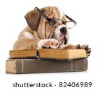 Stock photo purebred english bulldog in glasses and book 82406989