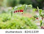 Small photo of Abutilon megapotamicum. Brazilian Bell Flower.