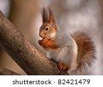 Eurasian Red Squirrel Eating O...