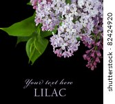 The Beautiful Lilac On A Black...