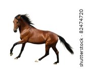 Stock photo rur beautiful russian trotter prize winner of the st petersburg international horse exhibition 82474720