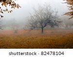 Tree In A Fog.apple Tree With...