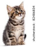 Stock photo british kitten on white background 82486834