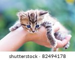 Stock photo kitten in hand 82494178