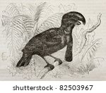 Small photo of Amazonian Umbrellabird old illustration (Cephalopterus ornatus). Created by Kretschmer and Wendt, published on Merveilles de la Nature, Bailliere et fils, Paris, 1878