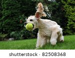 Stock photo dog with tennis ball 82508368