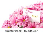 bouquet of pink flowers on a white background - stock photo