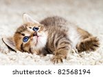 Stock photo funny kitten in carpet 82568194
