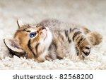 Stock photo funny kitten in carpet 82568200