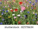 Wildflower Field With Many...