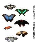 Beautiful Tropical Butterflys
