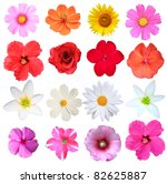 flowers isolated on white stock ... | Shutterstock . vector #82625887