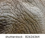 African Elephant Skin Close Up