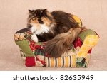 Calico Persian On Patchwork...
