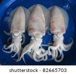 Fresh squid in the market - stock photo
