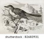 Northern Mockingbird Old...