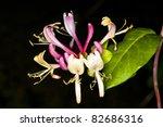 Lobelia  Medicinal Plant Of Th...