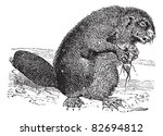 beaver or rodent vintage... | Shutterstock .eps vector #82694812