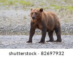 brown bear walking in water....   Shutterstock . vector #82697932