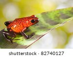 Red Poison Strawberry Frog On...