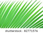 Texture Of Green Palm Leaf For...