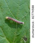 big caterpillar on a green leaf   Shutterstock . vector #82774588
