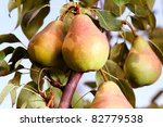Pears On A Branch Stabbed