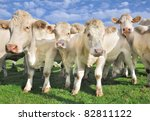 crowd of calves and cows | Shutterstock . vector #82811122