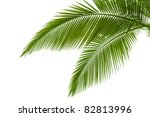 palm leaves isolated on white   Shutterstock . vector #82813996
