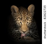Leopard Face Close Up In The...