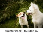 Stock photo two happy dogs are playing together 82838416