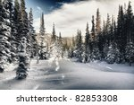 Winter forest in Rocky mountains national park, colorado - stock photo