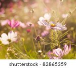 Different Pink Cosmos Flowers...