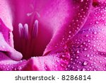 Closeup Of Pink Flower With...