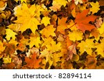 Colorful Autumn Leaves...