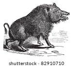 ancient,animal,antique,art,artistic,artwork,biological,biology,black,boar,design,drawing,engraved,engraving,etching