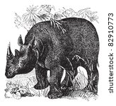 Постер, плакат: Black Rhinoceros or Diceros