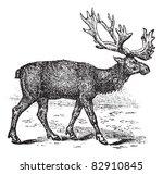 reindeer or rangifer tarandus... | Shutterstock .eps vector #82910845