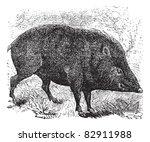 collared peccary or pecari... | Shutterstock .eps vector #82911988