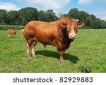 Very Impressive Limousine Bull...