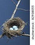 Robin Eggs In Bird Nest