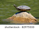 Turtle Doing Yoga Finding The...