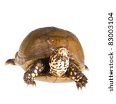 three toed box turtle ... | Shutterstock . vector #83003104
