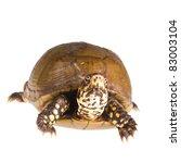 three toed box turtle ... | Shutterstock . vector #83003104