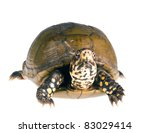 three toed box turtle ... | Shutterstock . vector #83029414